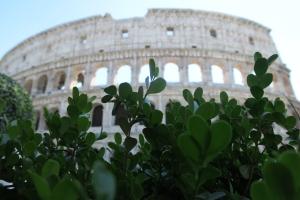 Kolezyum ya da Colosseo.